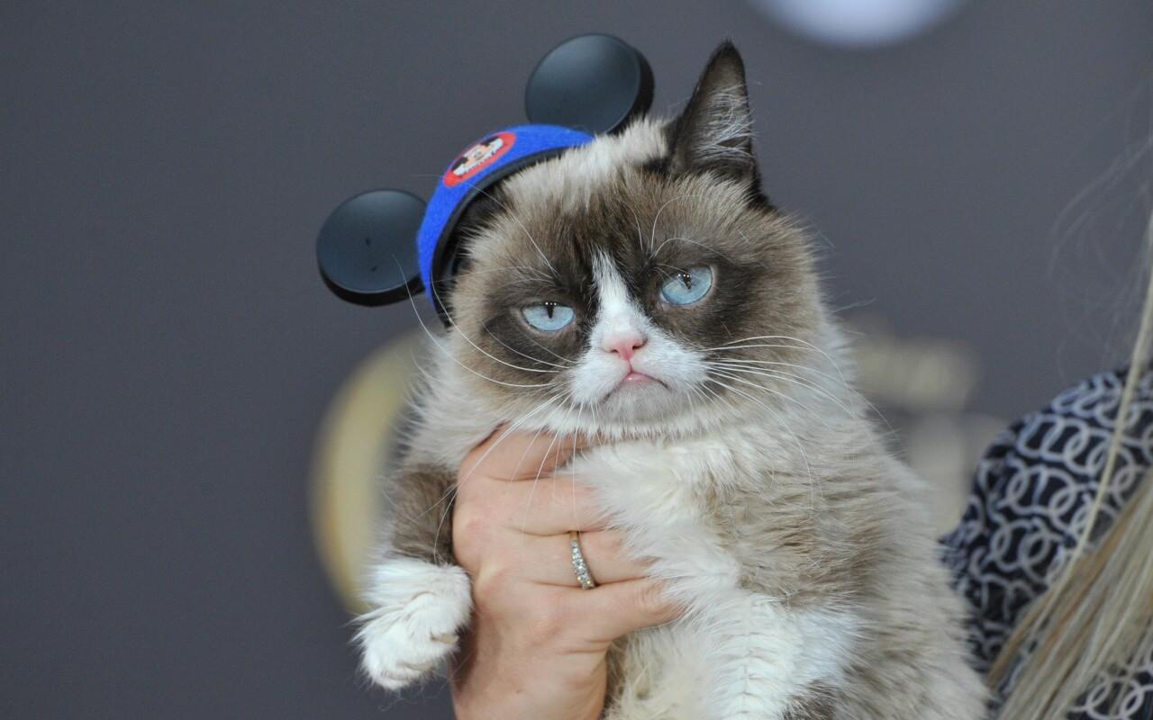 Grumpy Cat in Disney wearing Mickey Mouse ears